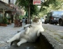 Lazy Cat? Pah! We can do better thanthat…