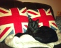 God Save the Cats (or something likethat!)