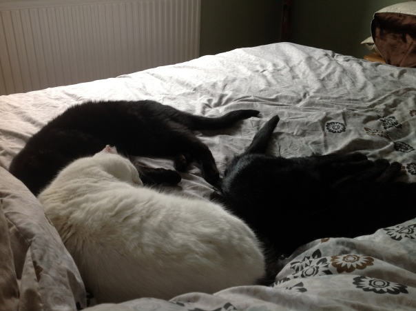 Three on the bed