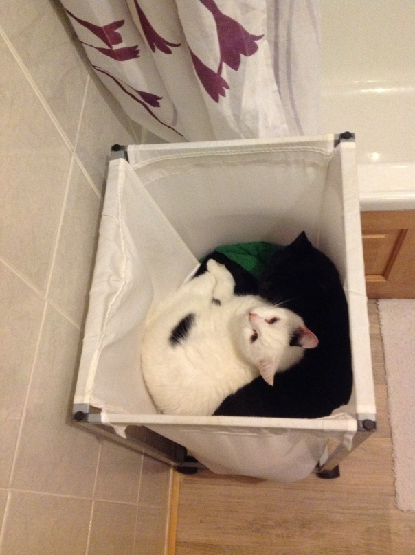 Cats in washbasket