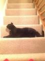 Stair block