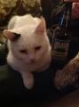 Cat needs adrink