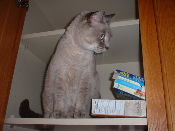 Nylablue cleaning cupboard 2