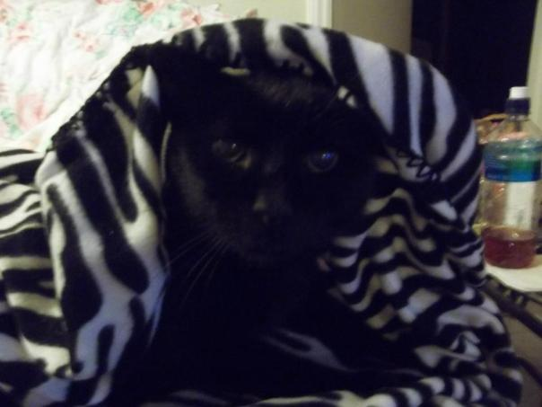 Taylor with his blankie 2013