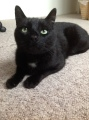 Henry loves his catniptoy