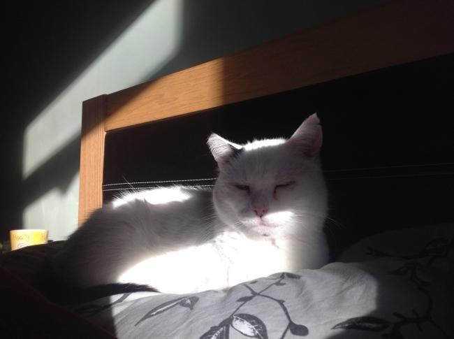 Archie in a sunbeam
