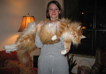 largest_cat
