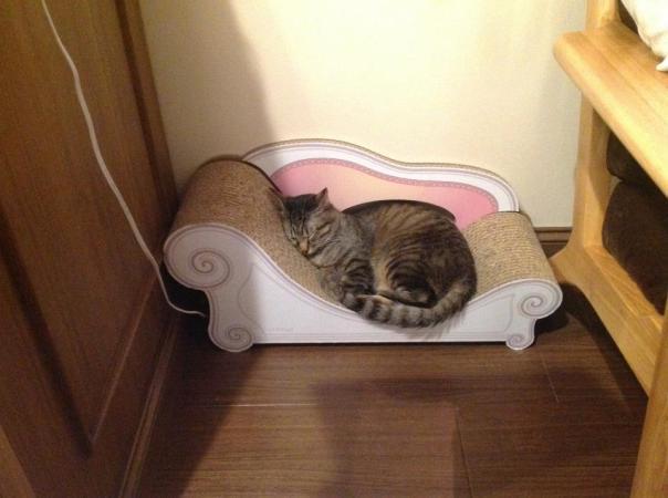 Tokyo Cat Cafe