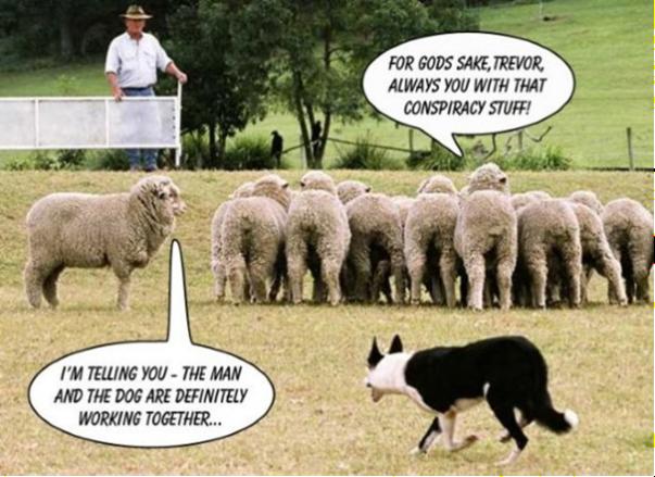 Funny sheep joke