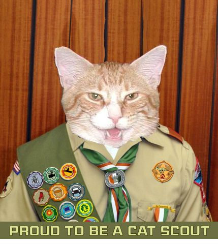 3 Timmy Proud Cat Scout