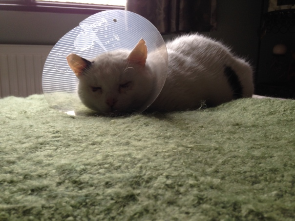 Archie with cone