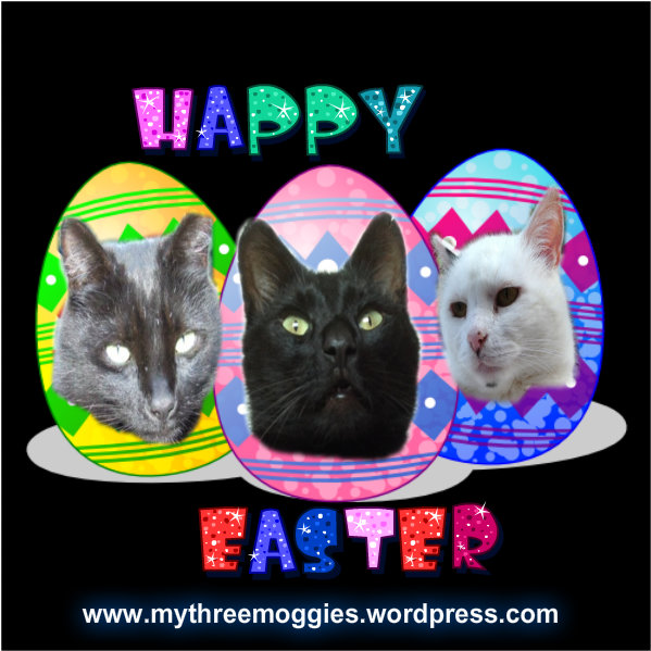 Easter Moggies