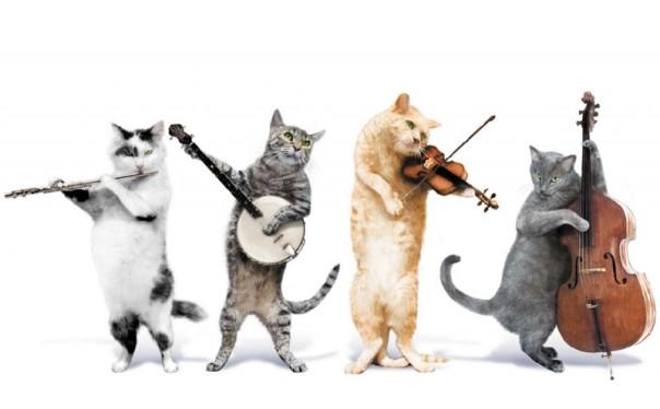 dancing-cats