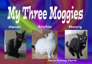 My 3 Moggies_resized