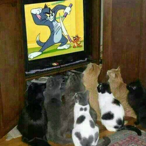 Funny-cats-watching-tom-and-jerry