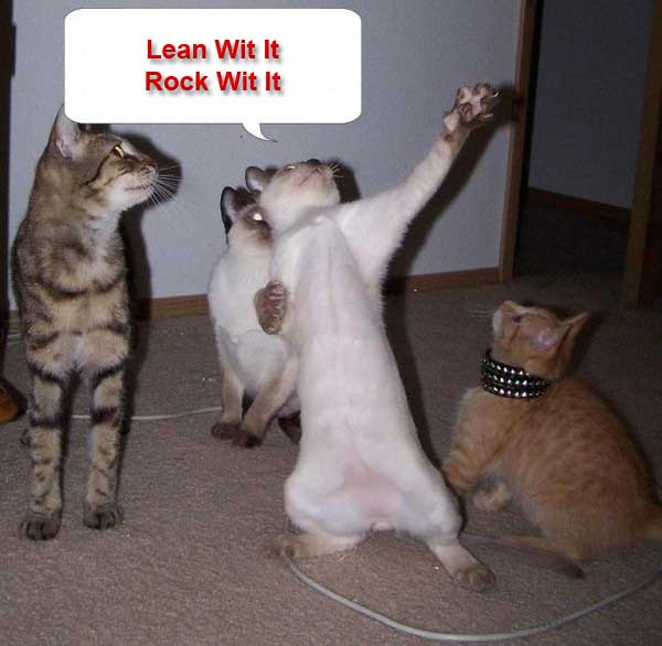 lol_funny_cats_with_quotes_1