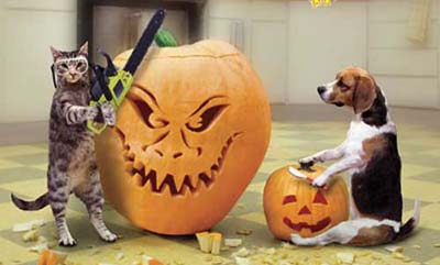 catanddogpumpkin