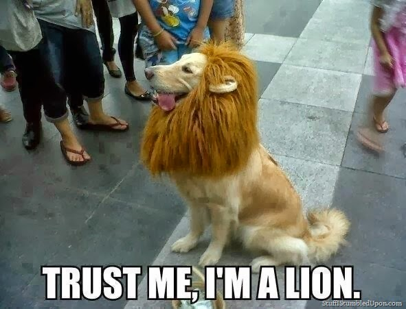 dog-meme-halloween-costume-lion-king_thumb
