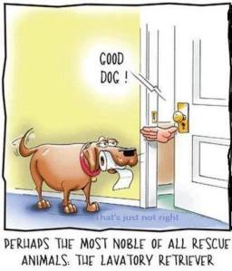 Funny-dog-cartoon-1