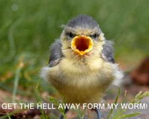 bird-funny-animal-humor-19943094-768-614