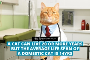 fact9-a-cat-can-live-20-or-more-years-but-the-average-life-span-of