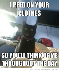 funny-overly-attached-cat-peed-clothes-think-of-me-day-pics