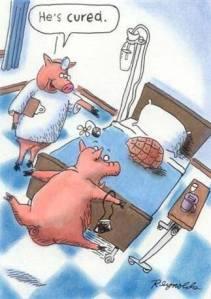 Funny-pig-cartoon