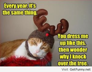Cat-costume-for-Christmas