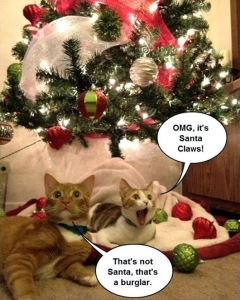 cats-christmas-meme-19121
