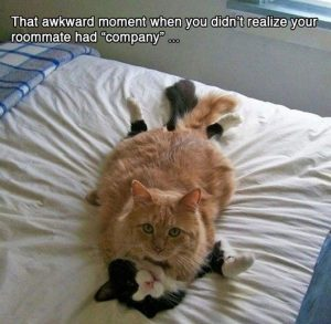 15-funny-awkward-animal-moments3.jpg.pagespeed.ce.TKcaHWsV6CAPPCl9YePV