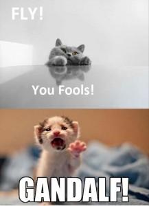 funny-animal-pictures-dumpaday-62-217x300