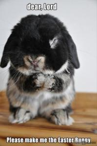 Funny-Animals-easter-bunny
