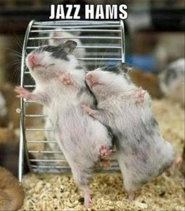 Funny-Animals-jazz-hams