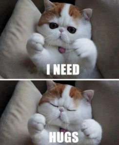 11-10-12-caturday-funny-cat-photos3.jpg.pagespeed.ce.IIaUv8H4OOpSp5X-7Rkr