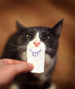 cat-funny-5