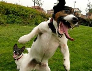 crazy-animals-1