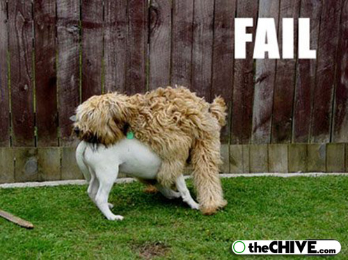 pet-dog-fail-funny-animal-18